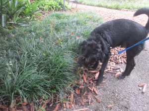sniffing a bush